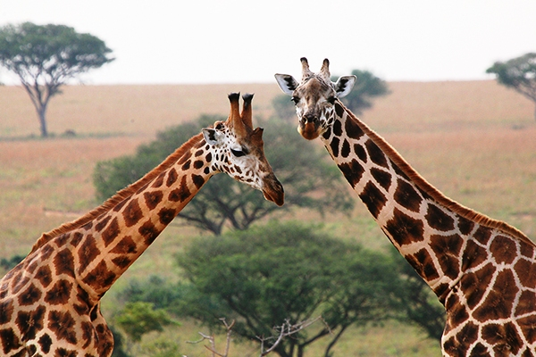 Tailored Safari Packages